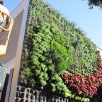 installation living wall at St Mary´s School 4