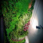 Living wall in interior courtyard of Seville