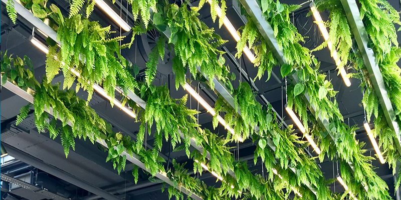 Garden roofs at Asics store on Oxford Street