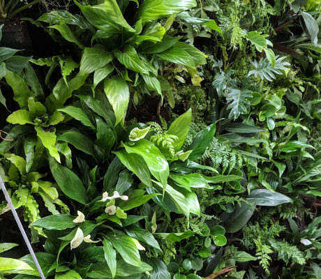 Outdoor Living Wall in New Zealand