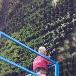 Outdoor Living Wall at CAB Facilities in Estepona